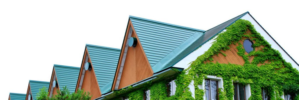 Blue metal roof with beautiful green vines grown on & covering a house's siding.